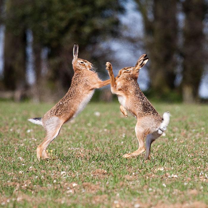 My Year with Hares - Martin Hayward Smith